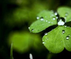 关于植物的诗歌