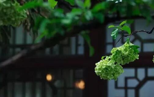苏州古典园林吸收了江南园林建筑艺术的精华其中狮子林沧浪亭留园和什么统称为