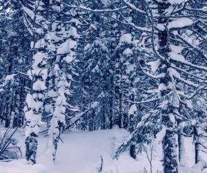 《林海雪原》读后感600字范文